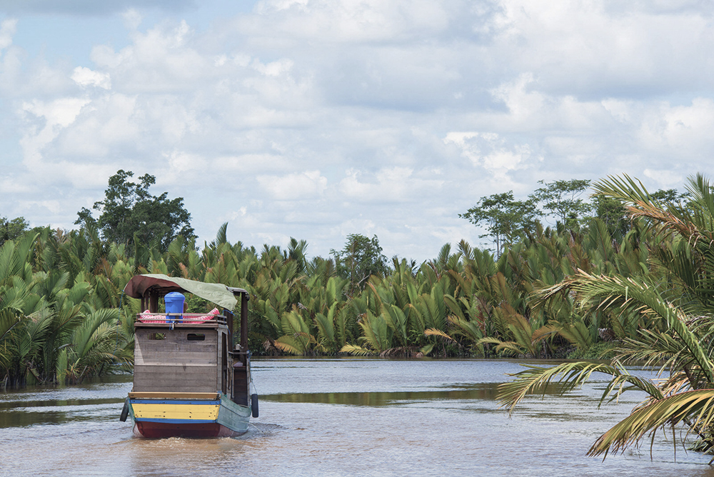 Klotok (traditional river boat) on Sekonyer River in Borneo, Central Kalimantan, Indonesia. On the shore of the river there are Nipa palms growing.