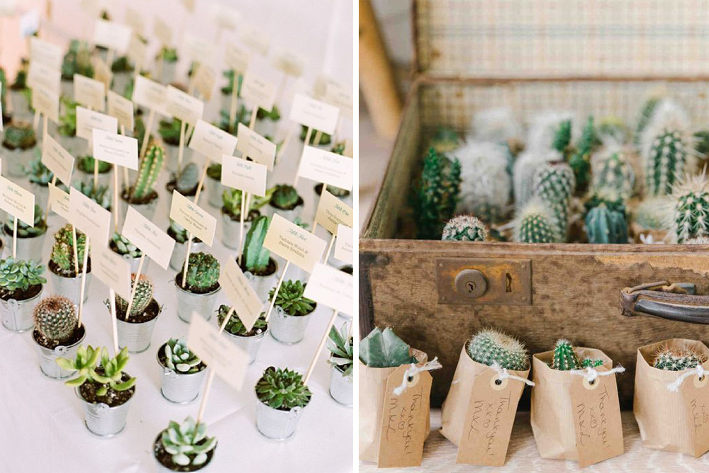 Regalos para invitados de boda: cactus