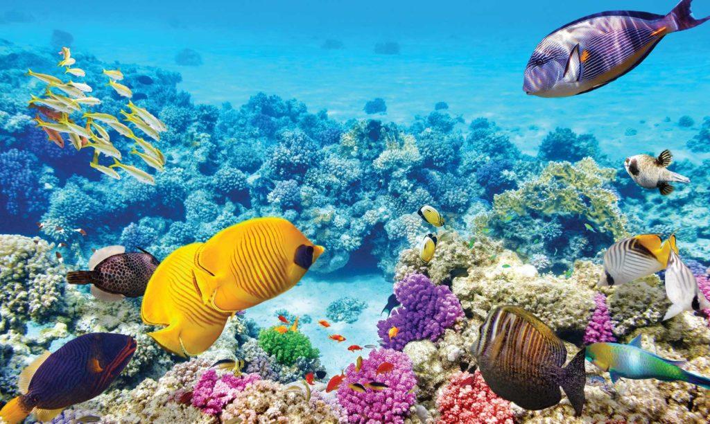 La-Gran-barrera-de-Coral-de-Australia-Paraíso-de-buceadores